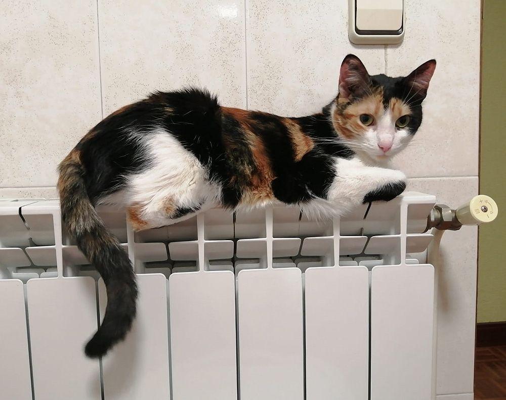 Mantenimiento de radiadores y calderas